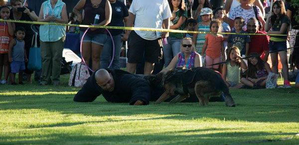 courtesy photo/rialto network K9 demonstrations will attract crowds during Rialto's National Night Out Aug. 2